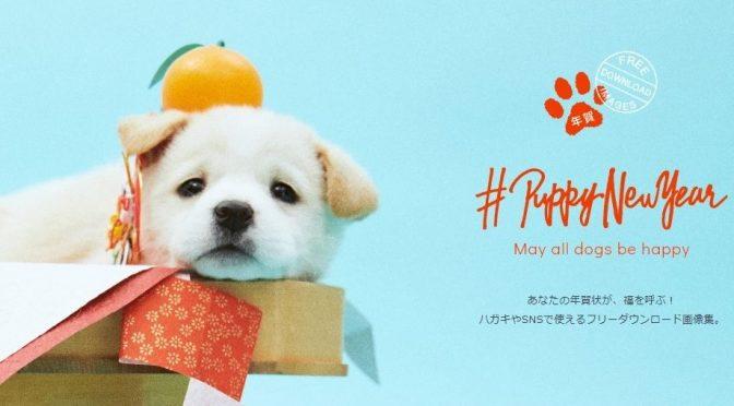 年賀状デザインまだの方におすすめ!保健所で里親を待つ犬のフォトストックが無料ダウンロード可