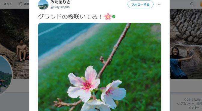 【不思議】秋に咲く季節外れの『桜』。その種類と今年の「秋の桜」ツイートまとめ